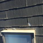 屋根 (4)